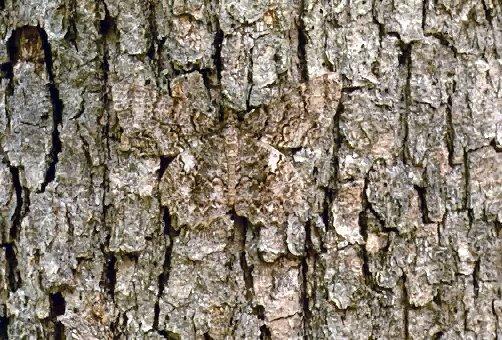 Chief John Big Tree Wallpapers