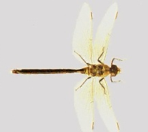 Dragonfly Classification | RM.